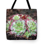 Hen And Chicks Tote Bag by Tony Murtagh