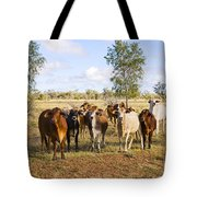 Herd Of Brahman Cattle In Outback Queensland Tote Bag by Colin and Linda McKie