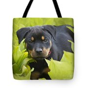 Hey Here I Am Tote Bag by Heiko Koehrer-Wagner