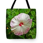 Hibiscus Tote Bag by Aimee L Maher Photography and Art