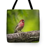 House Finch Tote Bag by Christina Rollo