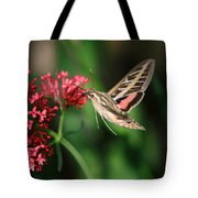 Hummingbird Moth Tote Bag by Donna Kennedy