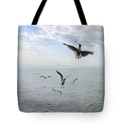 Hungry seagulls flying in the air Tote Bag by Matthias Hauser