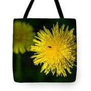 Insects On A Dandelion Flower - Featured 3 Tote Bag by Alexander Senin