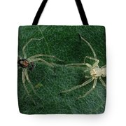 Jumping Spider Colorful Male And Pale Tote Bag by Mark Moffett