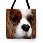 KC Tote Bag by Kathleen Struckle