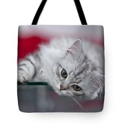 Kitten Tote Bag by Melanie Viola