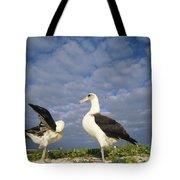 Laysan Albatross Courtship Dance Hawaii Tote Bag by Tui De Roy
