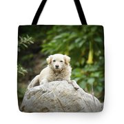 Lazy Dog Tote Bag by Aged Pixel