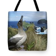 Light-mantled Albatross Sky-pointing Tote Bag by Tui De Roy