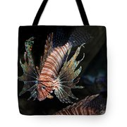 Lionfish 5d24143 Tote Bag by Wingsdomain Art and Photography