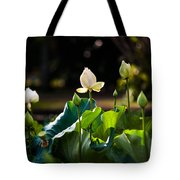Lotuses In The Evening Light Tote Bag by Jenny Rainbow