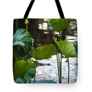 Lotuses In The Pond Tote Bag by Jenny Rainbow