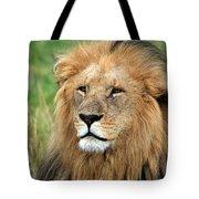 Masai Mara Lion Portrait    Tote Bag by Aidan Moran
