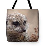 Meerkat 7 Tote Bag by Ernie Echols
