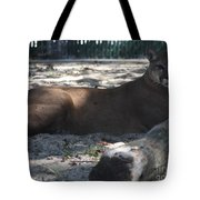Mountain Lion Tote Bag by John Telfer