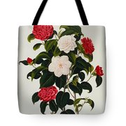 Myrtle Leaved Camellia Tote Bag by Clara Maria Pope