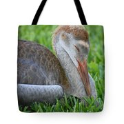 Napping Sandhill Baby Tote Bag by Carol Groenen