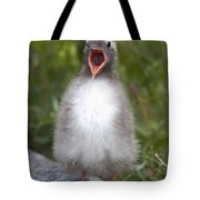 Newborn Arctic Tern Chick With Mouth Tote Bag by Doug Lindstrand