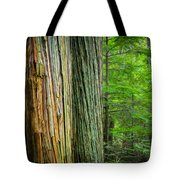 Old Growth Cedars Glacier National Park Painted Tote Bag by Rich Franco