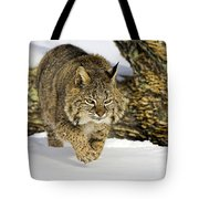 On The Prowl Tote Bag by Jack Milchanowski