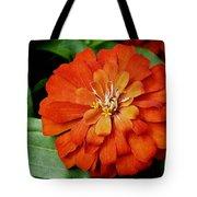 Orange Velvet Zinnia Tote Bag by Andee Design