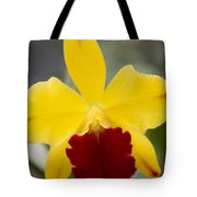 Orchid Beauty - Cattleya - Pot Little Toshie Mini Flares Mericlone Hawaii Tote Bag by Sharon Mau