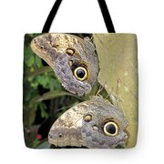 Owl Butterflies Tote Bag by Bob Slitzan