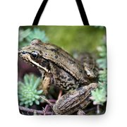 Pacific Tree Frog Among Succulent Plant Tote Bag by David Gn