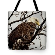 Perched On High Tote Bag by Thomas Young