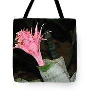 Pink Bromeliad Bloom Tote Bag by Kaye Menner