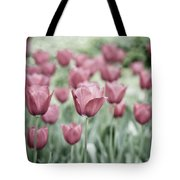 Pink Tulip Field Tote Bag by Frank Tschakert