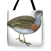 Plains Wanderer  Tote Bag by Anonymous
