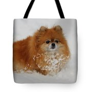 Pomeranian In Snow Tote Bag by John Shaw