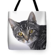Portrait Of A Grey Tabby Catvancouver Tote Bag by Thomas Kitchin & Victoria Hurst