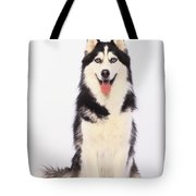 Portrait Of A Siberian Huskybritish Tote Bag by Thomas Kitchin & Victoria Hurst