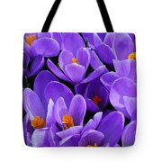 Purple Crocus Tote Bag by Elena Elisseeva