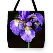 Purple Iris Tote Bag by Adam Romanowicz