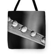 Raindrops On Grass Blade Tote Bag by Elena Elisseeva
