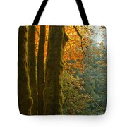 Rainforest Orange Tote Bag by Adam Jewell