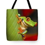Red Eyed Leaf Frog Tote Bag by Bob Hislop