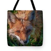 Red Fox Tote Bag by Bianca Nadeau