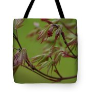 Red Maple Tote Bag by Kelly Hazel
