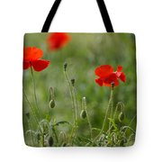 Red Poppies 2 Tote Bag by Carol Lynch