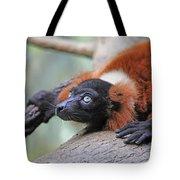Red-ruffed Lemur Tote Bag by Karol Livote