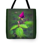 Rose Bud Tote Bag by Brian Wallace