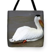 Rough Billed Pelican Tote Bag by Alyce Taylor