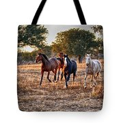 Running Horses Tote Bag by Kristina Deane