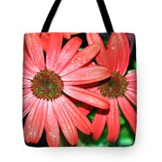Salmon Daisy Tote Bag by Aimee L Maher Photography and Art