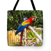 Scarlet Macaw Tote Bag by John Bailey